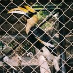 bird_big1
