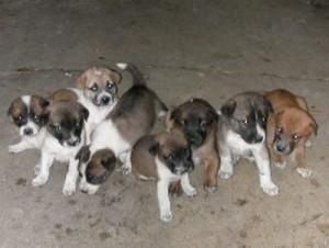 dog_group_big